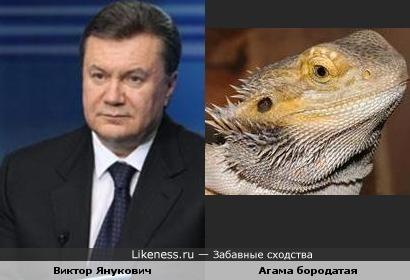 Янукович ящерица! нет, ну правда