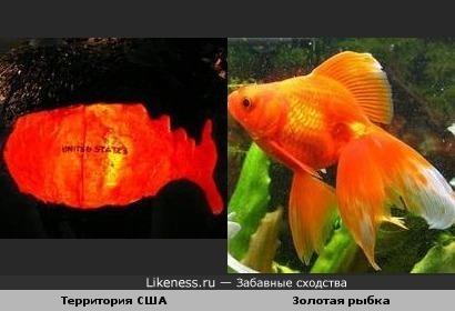 США- родина золотой рыбки