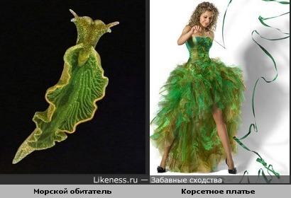 Морской обитатель похож на корсетное платье