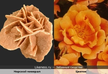 Морской минерал и цветок