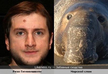 Резо Гигинеишвили похож на морского слона (носом)