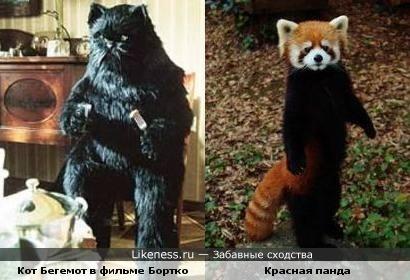 Кот Бегемот и красная панда