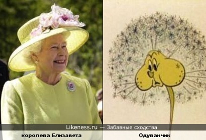 королева Елизавета и одуванчик - толстые щёки