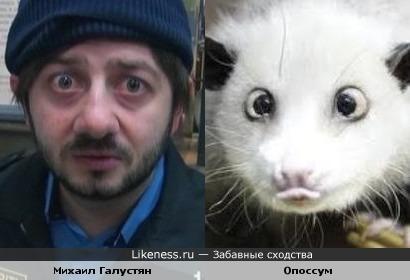 Михаил Галустян в образе похож на опоссума