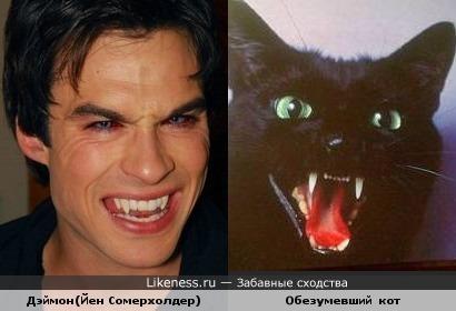 """Дэймон из """"Дневников вампира"""" напоминает кота))"""