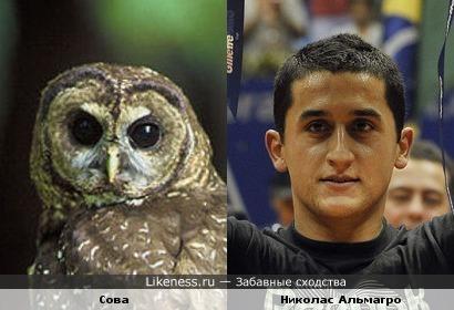 Теннисист Николас Альмагро напоминает сову