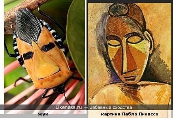 жук похож на лицо девушки с картины Пабло Пикассо