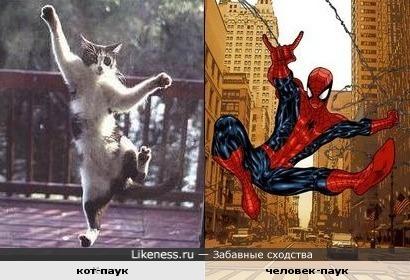Кот насмотрелся мультиков про человека-паука:)