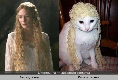 """Причёска Галадриэль из """"Властелина Колец"""" очень похожа на причёску этой кошечки"""