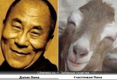 Улыбающийся Далаи похож на Ламу)