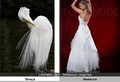 Птица похожа на невесту.