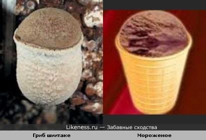 Гриб шиитаке по внешнему виду похож на шоколадное мороженое