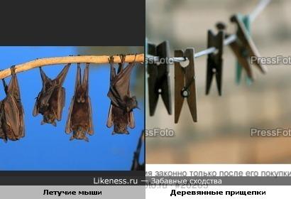 Летучие мыши похожи на деревянные прищепки
