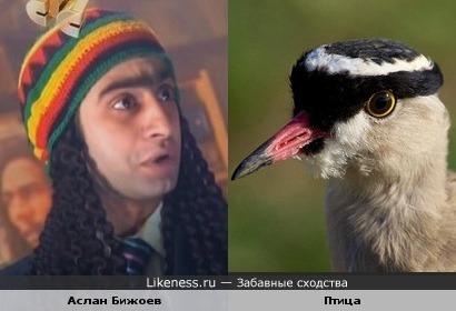 У Кекса из сериала «Даешь молодежь» и птицы одинаковый прикид