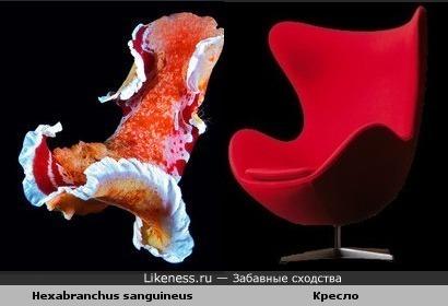 Голожаберный моллюск похож на кресло