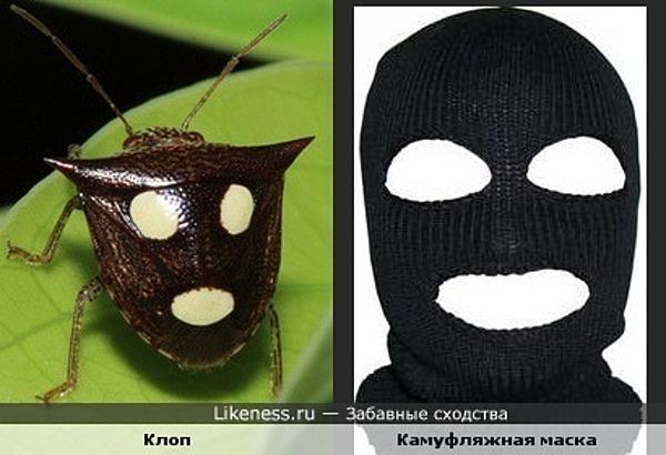 Клоп в камуфляжной маске