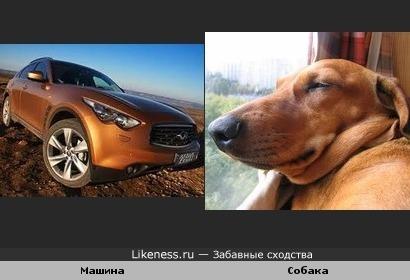 Машина Infiniti похожа на собаку...