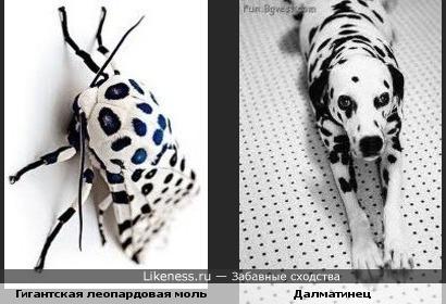 животные,насекомые,природа,собаки,фауна,раскраска