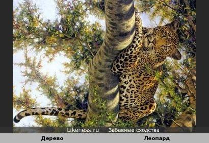 Кора дерева по окраске похожа на шерсть леопарда...