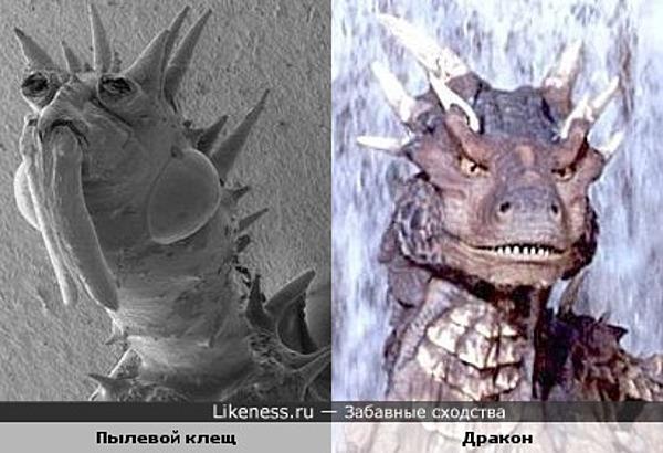 Пылевой клещ под микроскопом похож на дракона...