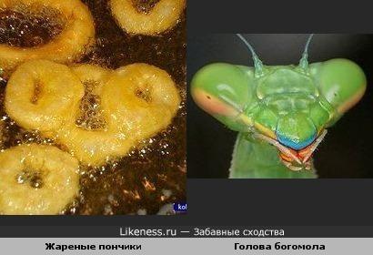 Жареные пончики и голова богомола