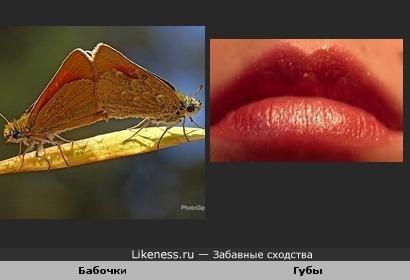 Две бабочки похожи на губки...