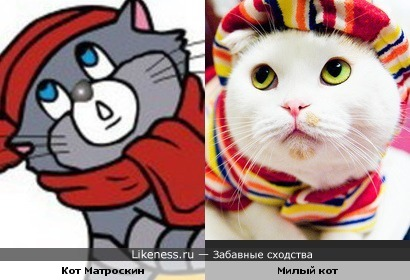 Кот Матроскин и просто милый кот