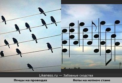 Птицы на проводах и ноты на нотном стане