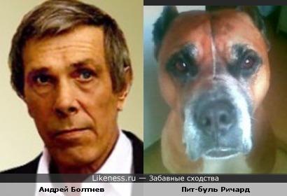 Пит-буль Ричард похож на Андрея Болтнева