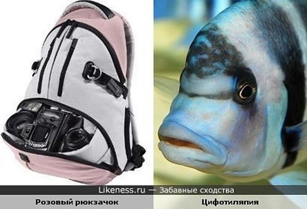 Рюкзачок похож на голову рыбы