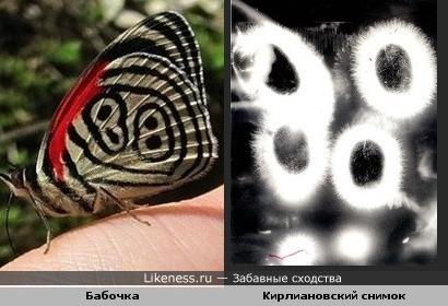 Рисунок на крыле у бабочки и кирлиановский снимок