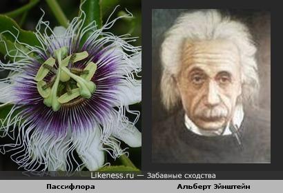Тычинки с пестиками в центре экзотичного цветка похожи на человеческое лицо