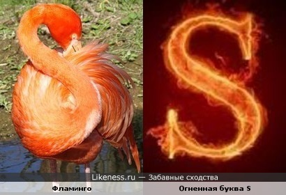 """Фламинго и буква""""S"""""""