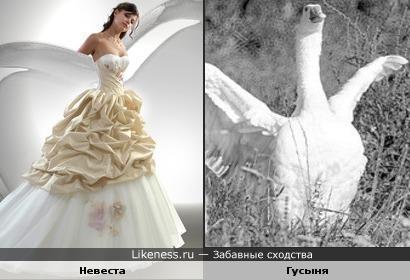 Невеста и гусыня...