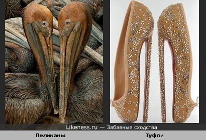 Ассоциация:клювы пеликанов и экстремально высокие каблуки туфель