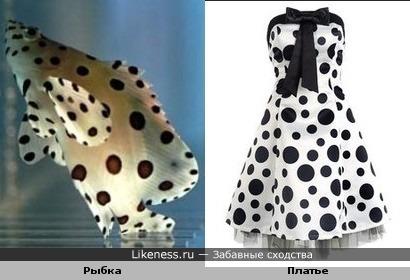 Рыбка в горошек + платье в горошек = мода на горошек