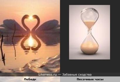 Лебеди и их отражение в воде напомнили песочные часы