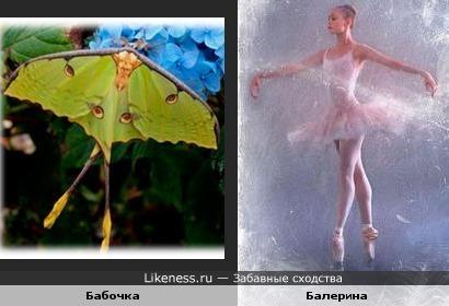 Бабочка - балерина