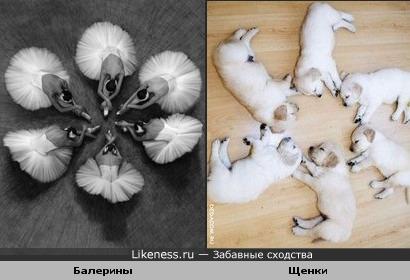 Балет и спящие щенки