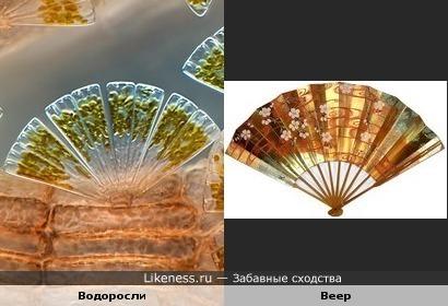 Морские водоросли похожи на веер