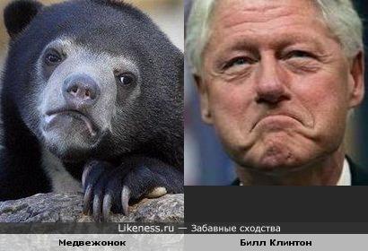 Медвежонок и Билл Клинтон