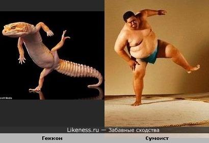 Геккон - сумоист )))