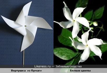 Цветы похожи на вертушку