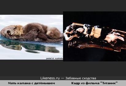 """Мать калана с детёнышем и кадр из фильма """"Титаник""""..."""