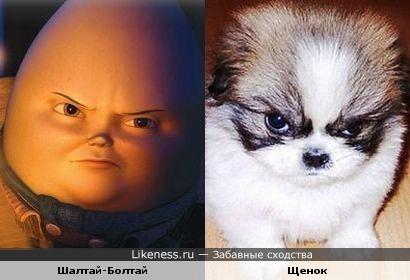 Шалтай-Болтай и щенок