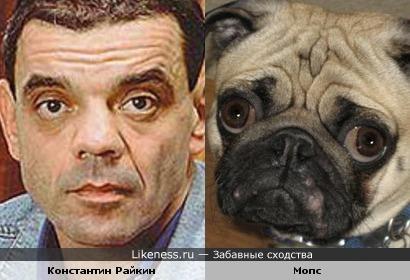 Мопс похож на Константина Райкина