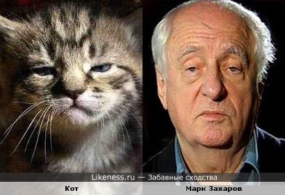 Кот похож на Марка Захарова