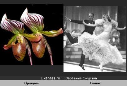 Танцующие орхидеи