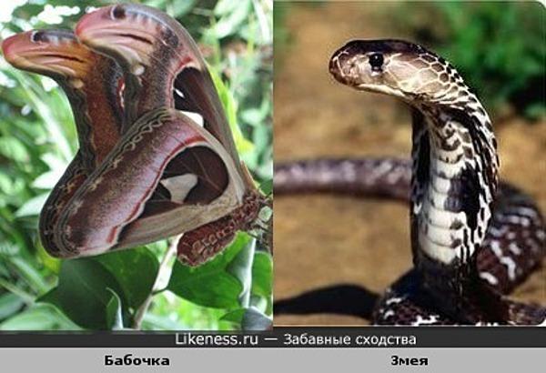 """Загадка: """"Сколько змей Вы видите в этом лайке?"""""""
