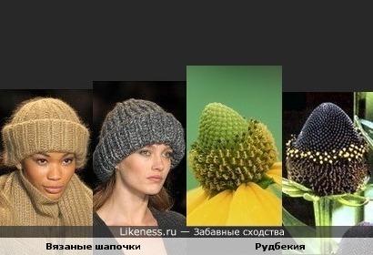 Соцветия рудбекии похожи на вязаные шапочки